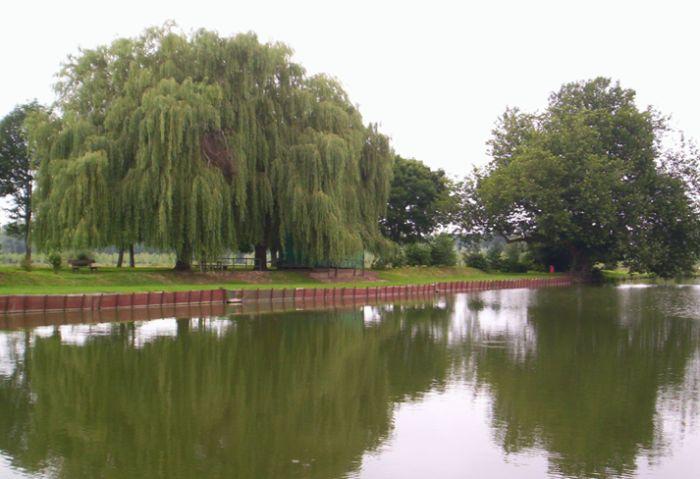 Vue de l'etang avec les saules pleureur et un platane - arboretumiwuy